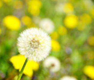 Сенната хрема се кръстосва и с хранителна алергия