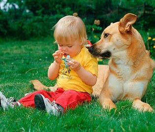 Домашният любимец - полезен за възпитанието и здравето