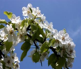 За пролетта и кожата - грип